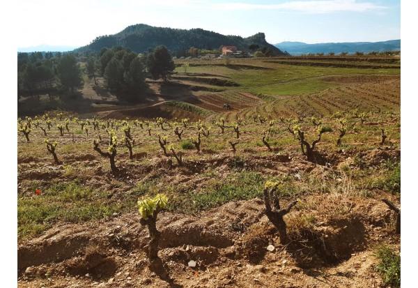 西班牙Priorat產區酒莊Mas d'en Gil : 葡萄品種Garnacha 海歌娜